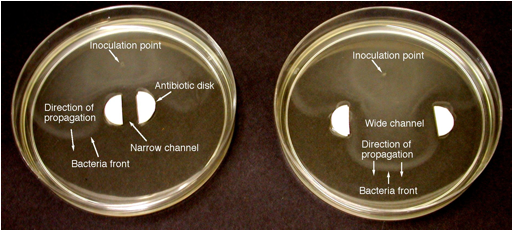 E.coli.narrow&wide.channel.jpg